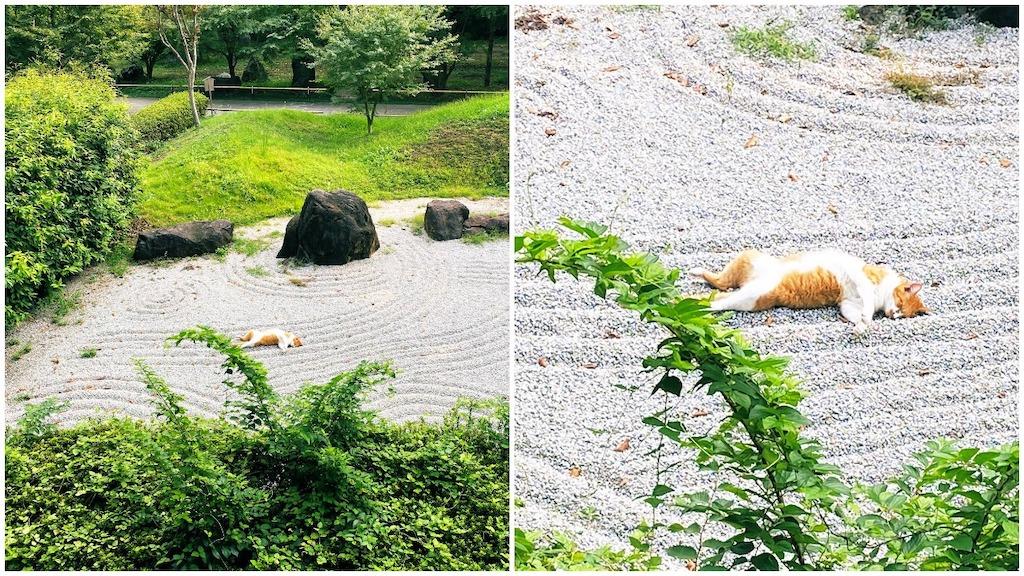 Cat in Zen Garden