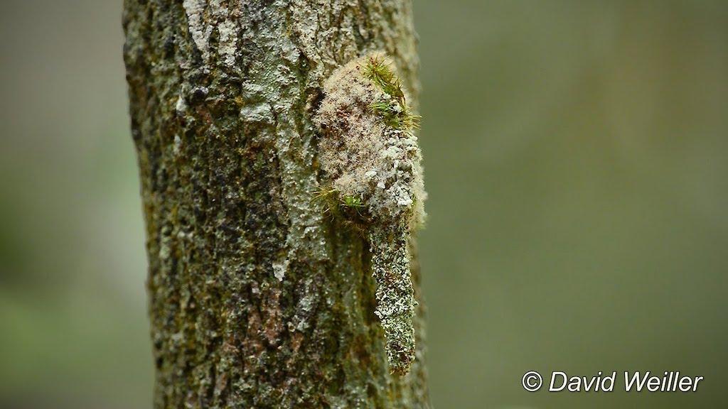 Debris Carrying Camouflaged Larva
