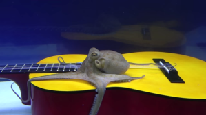 Octopus Reacts to Guitar