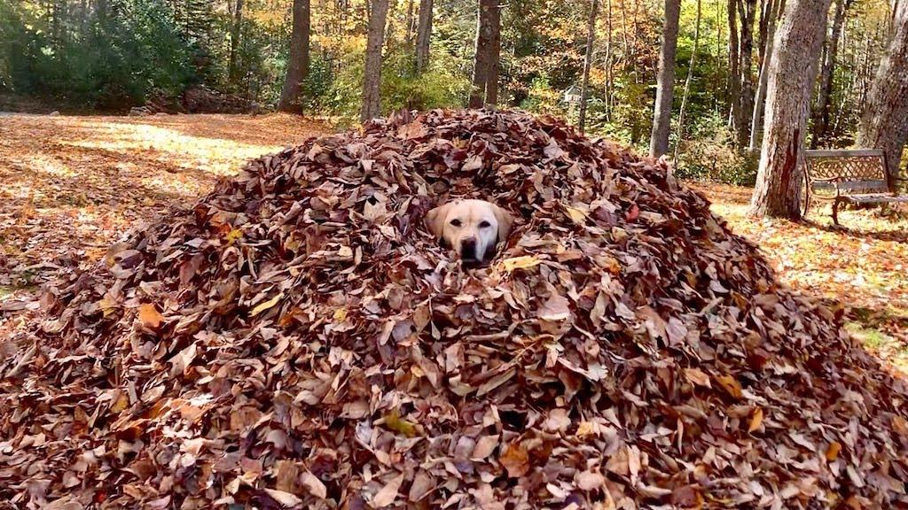 Stella in Leaves