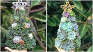 Succulent Christmas Trees