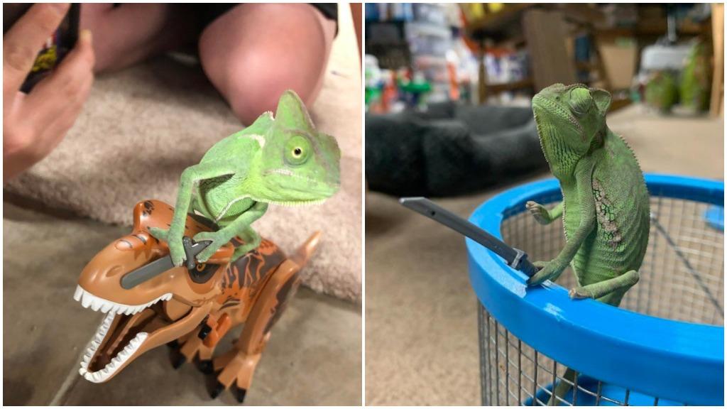 Sword Wielding Chameleon