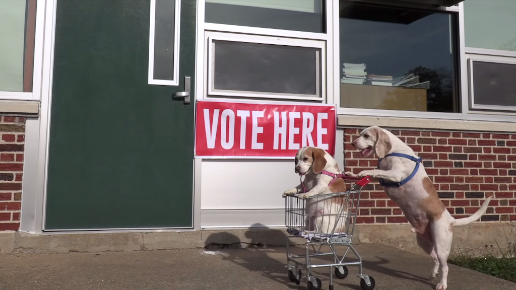 Maymo the Beagle Takes Sister Penny on a Shopping Cart Adventure Around Town on Their Way to Vote
