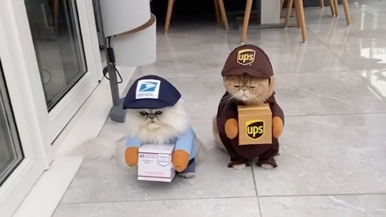 A Pair of Persian Cats Dressed Up as USPS and UPS Delivery Workers With Packages for Halloween