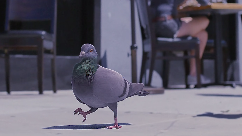 Strutting Pigeon Who Dat