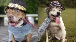 Dogs Dressed as Senior Citizens