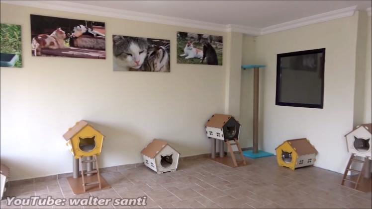 Outdoor Cats Indoor Home