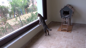 Outdoor Cats Stepping Inside A House For The First Time