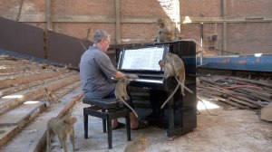 Playing Piano for Macaques