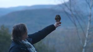 Rocky The Owl Takes Flight Ravensbeard Wildlife Center