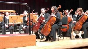 Cat Disrupts Orchestra