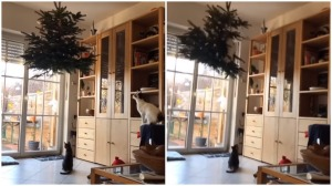 Cat Leaps Onto Hanging Christmas Tree