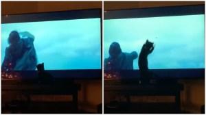 Cat Tries to Catch Kylo Ren Lightsaber