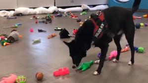 Dogs Picking their Own Santa Paws Present