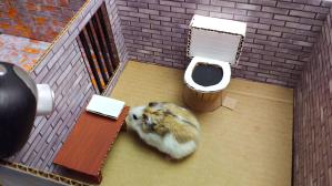 Hamster Prison Break