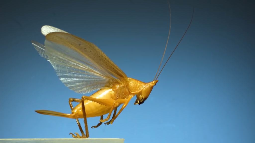 Ultra Slow Motion Footage of 11 Different Insect Species Spreading Their Wings to Take Flight