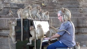 Music for Macaques