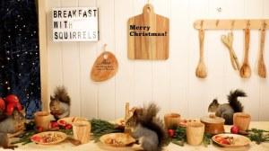 Squirrels Christmas Breakfast