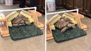 Tortoise Scratching Station