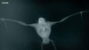 X-Ray Bat