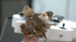 Birds Play Electric Guitar
