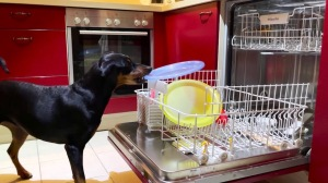 Dog Loading Dishwasher