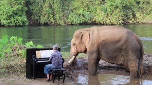 Piano for Mongkol the Elephant