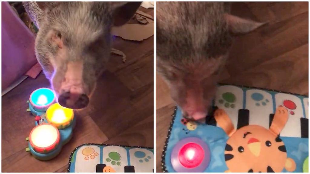 Rowan the Pig Music