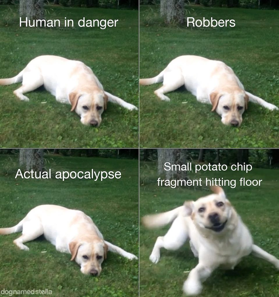 Dog Reactions