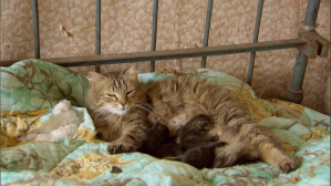 How Animals Reclaimed Chernobyl