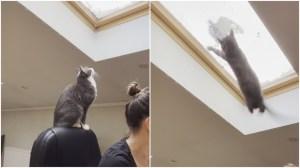 Indoor Cat Outdoor Pigeon Skylight