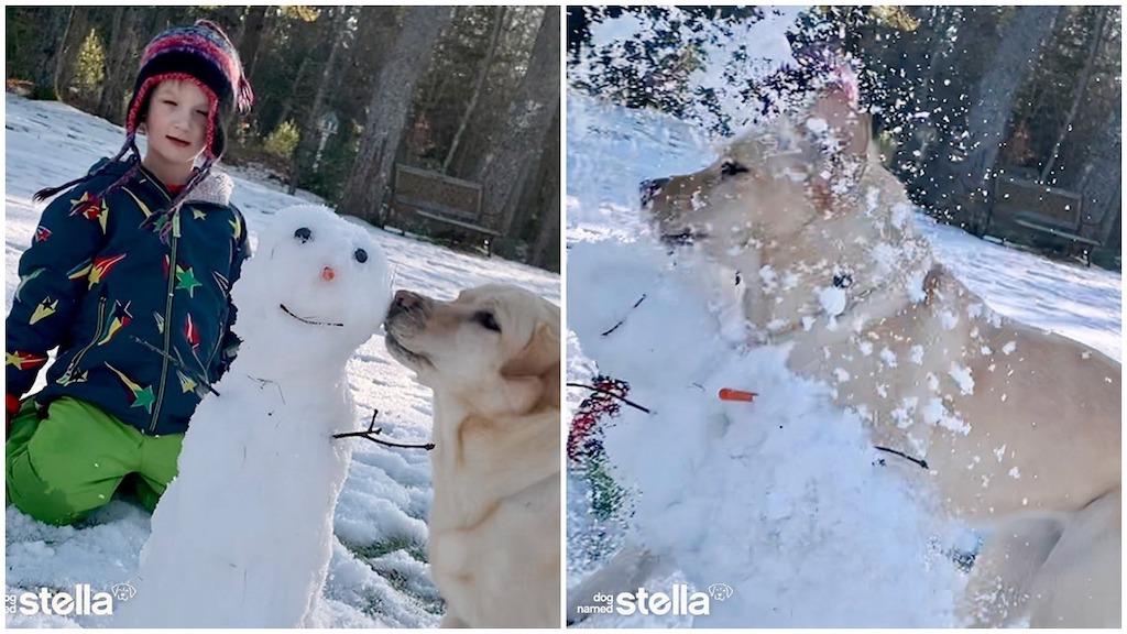 Stella the Yellow Lab Snowmen