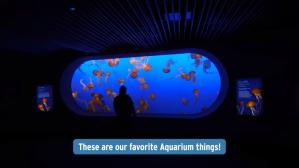 Aquarium Things Monterey Bay Aquarium