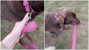 Dog Takes Human for Walk