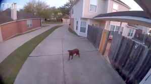 Escaped Dog