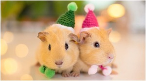 Hamster Hats