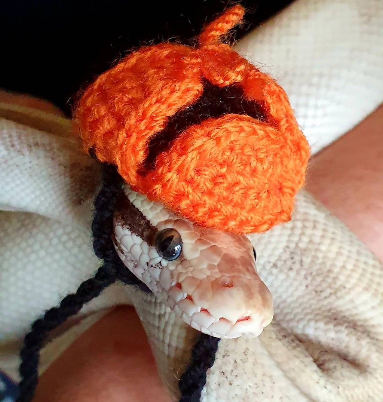 Hat for Snake