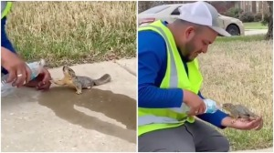 Man Gives Squirrel a Drink From Water Bottle