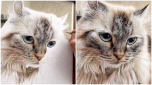 Photorealist Drawings of Cats