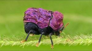 Tiny Shiny Beetle