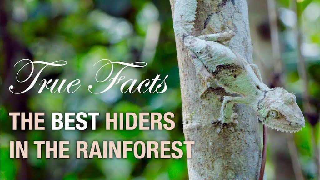 True Facts Best Hiders