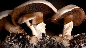 30 Days Mushroom Growth Time Lapse