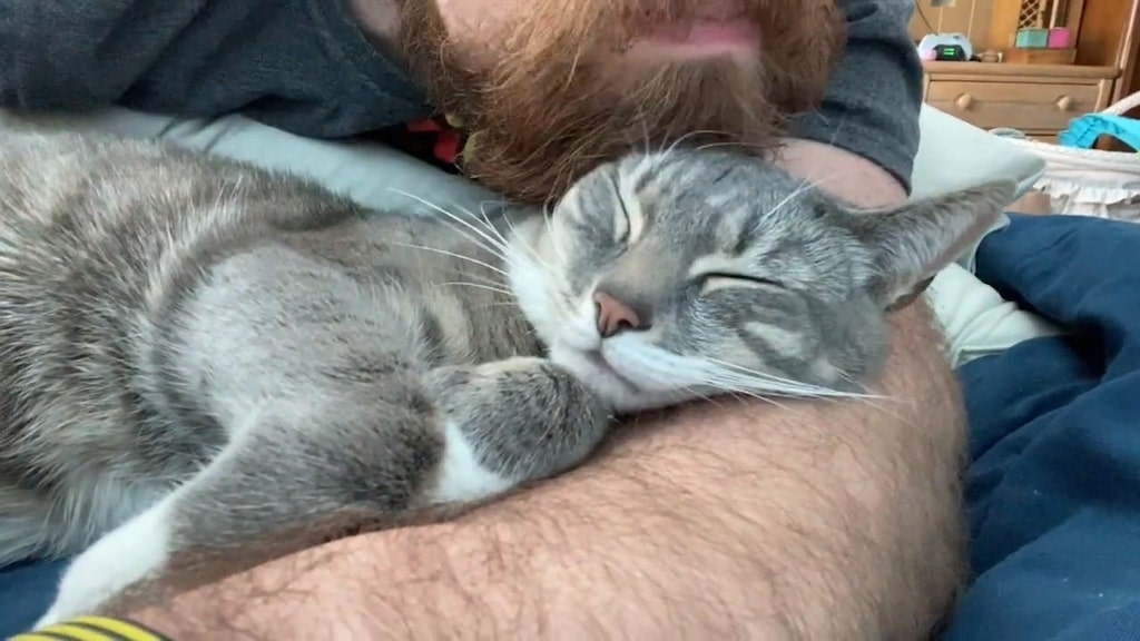 Man Gives His Cat a Head Scratches Using His Beard