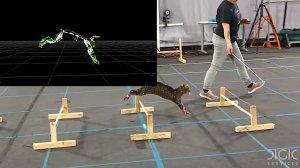 Cats Wearing Sensors Movement