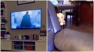 Dog Hides From Darth Vader on TV