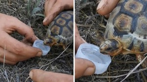 Firefighters Give Tortoise Drink of Water