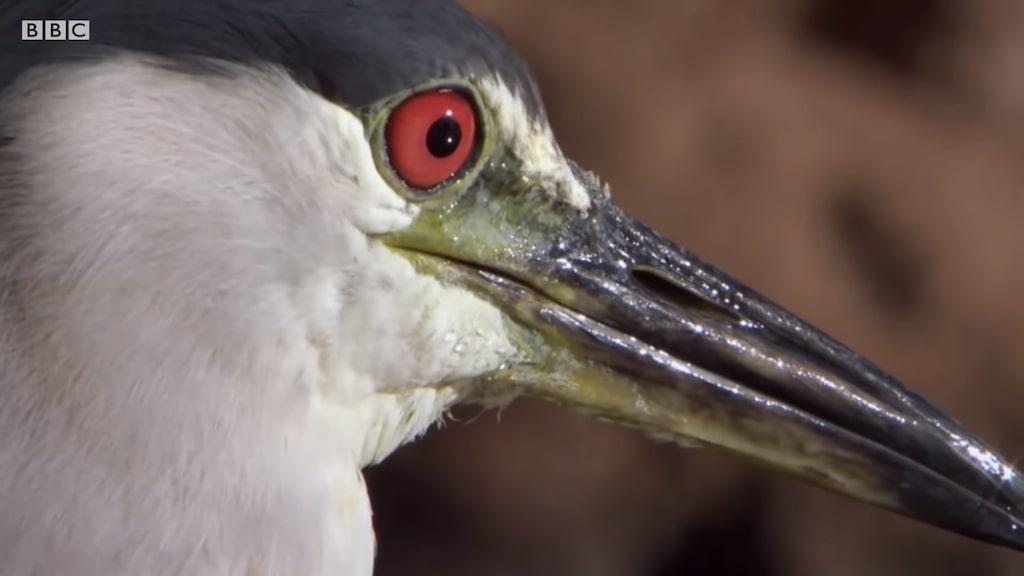 Unbelievable Bird Behaviors