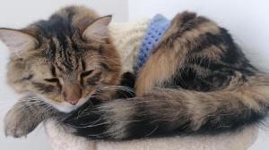 Voxel in Sweater Sleeping