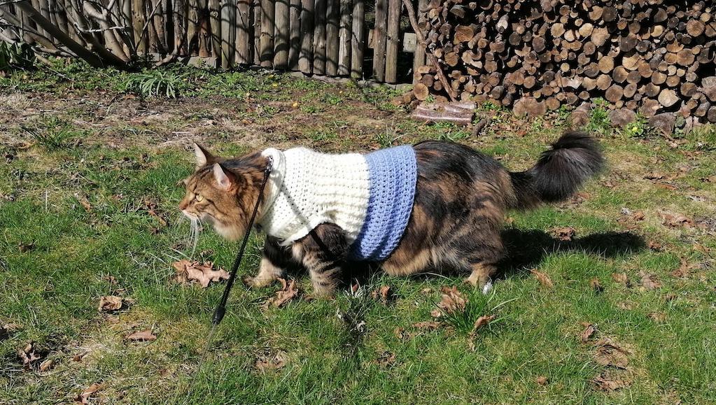 Voxel in Sweater on Walk