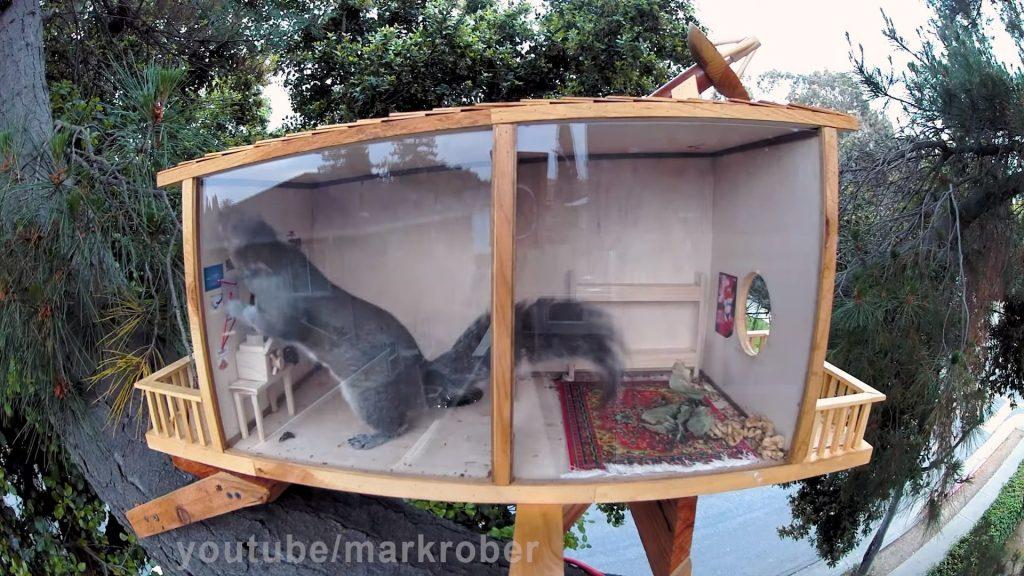 Backyard Squirrel Obstacle Course Walnut Heist Plot